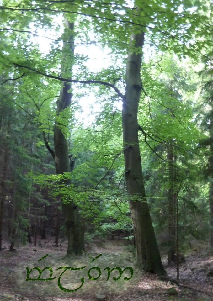 Bazos prace v lese
